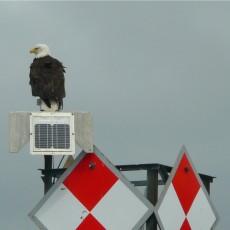 Ketchikan Eagles & Lighthouse Tour