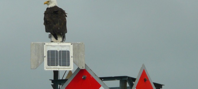 Ketchikan Eagles & Lighthouse Tour