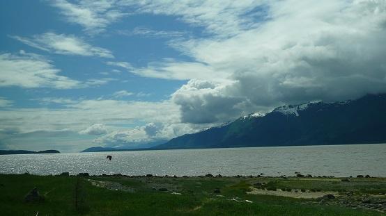 eagle taking off at Chilkat Lake Alaska